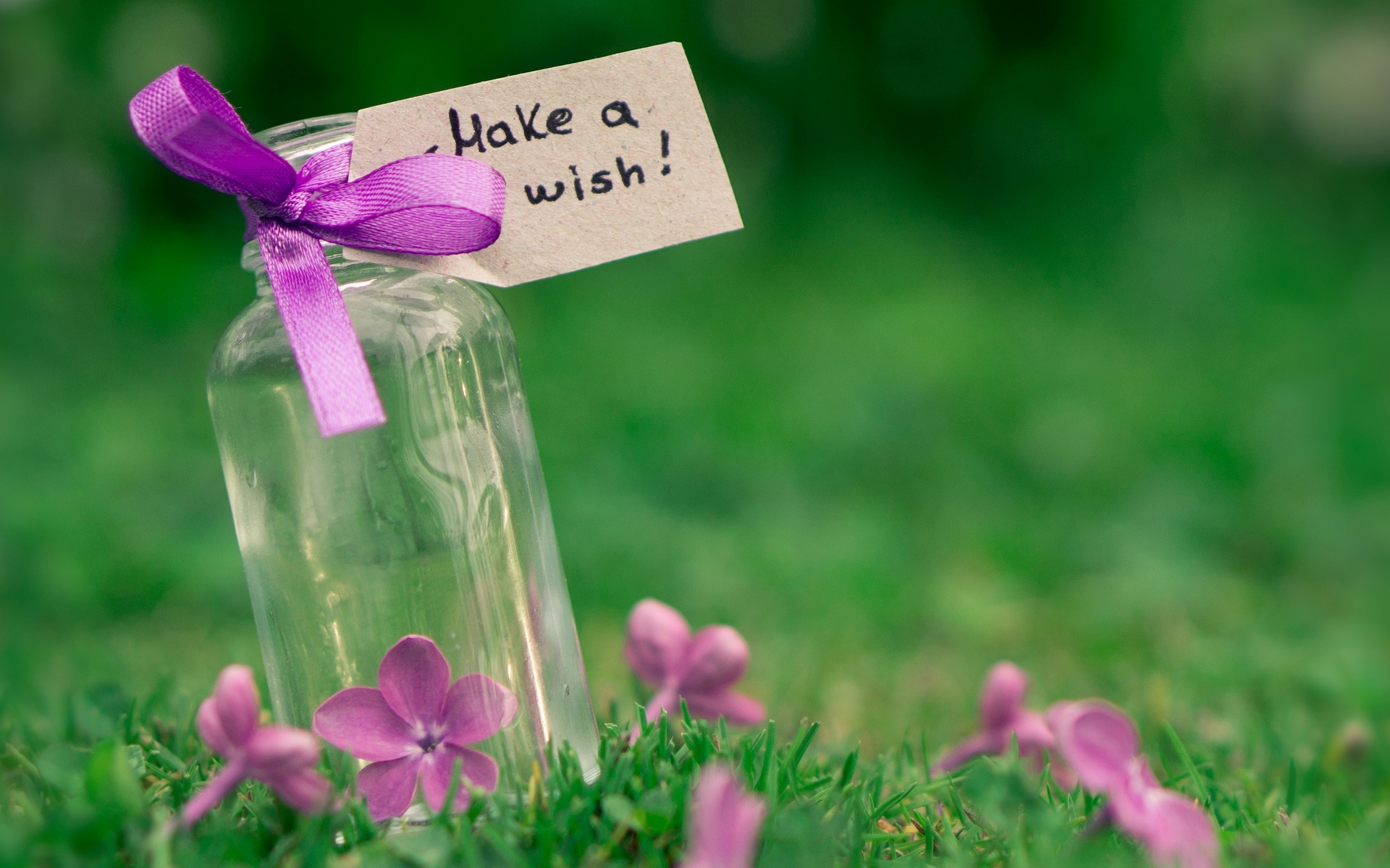 mood-cans-tape-ribbon-purple-sign-note-flowers-flowers-flowers-grass-green-nature-macro-macro-background-wallpaper-widescreen